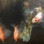 金魚がかゆがる原因は?底砂や壁に身体を擦りつける行為