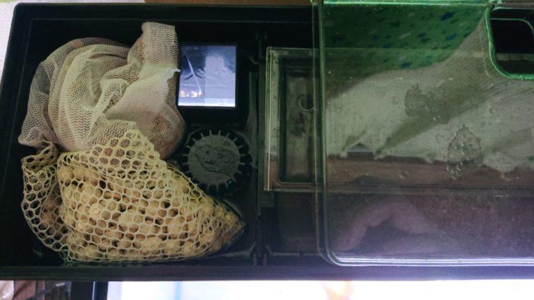 濾材 バクテリア 金魚