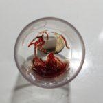 餌の赤虫の効果や成分を考察!冷凍や乾燥などの種類について